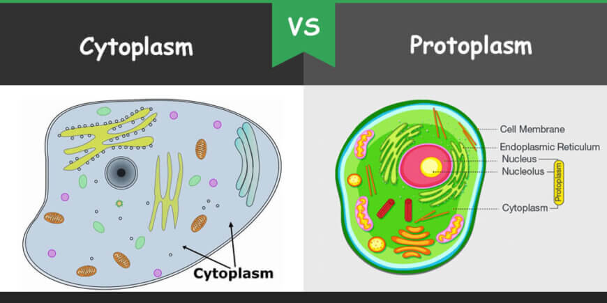 Difference between Cytoplasm and Protoplasm